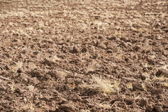 Close up of a plowed field. With some remaining stubble Royalty Free Stock Images