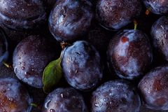 Close up of plum on dark. Background Stock Photography