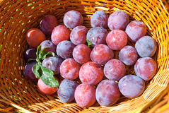 Close-up of plums in basket Royalty Free Stock Photos