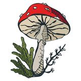 Unhealthy hand drawn stylized colorful poisonous amanita mushroom drawing on white background.  Stock Photo