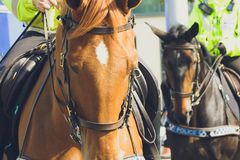 Close up of Police Horse. Shallow Depth of Field Split Toning Horizontal Photography Royalty Free Stock Photography