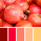 Close up of pomegranate on market .  color palette swatches. Royalty Free Stock Images