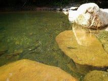 A close up of a pond Stock Photos