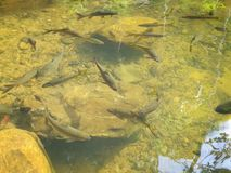 A close up of a pond Stock Image