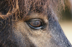 Close up Pony's eye Stock Photos