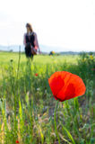 Close-up of a poppy and a young girl on the blurry background Stock Image