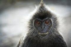 Close up portrait Royalty Free Stock Photo