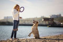 Close up portrait of beautiful long haired girl training her Labrador Retriever dog on the beach stock photos