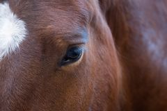 Close up portrait of beautiful wild brown horse eye. Animals details, farm pets concept.  stock image