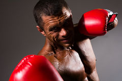 Close-up portrait of a boxer Royalty Free Stock Photo