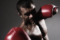 Close-up portrait of a boxer Stock Photography