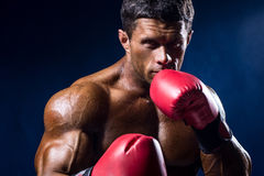 Close-up portrait of boxer in red boxing gloves on a dark blue b Royalty Free Stock Images