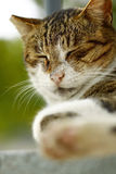 Close-up portrait of a cat Royalty Free Stock Images