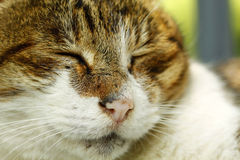Close-up portrait of a cat Stock Photos
