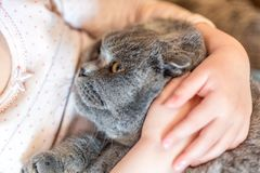 Close-up portrait of cat being hugged by child. Kitten patience. Best friends. Pet care.  Royalty Free Stock Photos