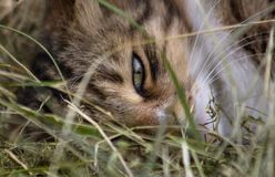 A close-up portrait of a cat`s green eye. stock photos