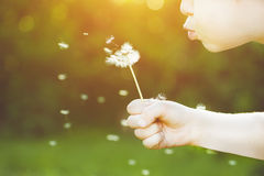 Close-up portrait of child blowing white dandelion. Background t Stock Photography