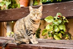 close up of a portrait of a curious sitting cat in relax position on a bench at the garden stock photo