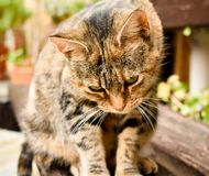 close up of a portrait of a curious sitting cat in relax position on a bench at the garden stock image