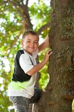 Cute boy climbing a tree. Stock Photography