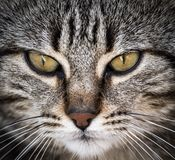 Close-up portrait of a cute cat looking straight at the camera. stock photo