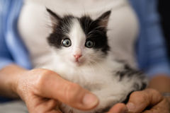 Close-up portrait of cute kitten held by senior woman. At retirement home Stock Image