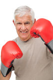 Close-up portrait of a determined senior boxer. Over white background Royalty Free Stock Images
