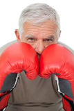 Close-up portrait of a determined senior boxer Stock Photo