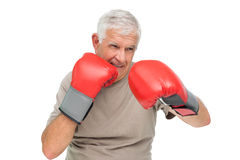 Close-up portrait of a determined senior boxer. Over white background Royalty Free Stock Photography
