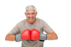 Close-up portrait of a determined senior boxer Stock Image