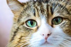 Close up portrait of domestic cat Stock Image