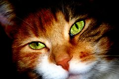 Close-up portrait of a domestic cat. Stock Photography