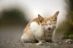 Close-up portrait of funny cute adorable ginger small white young cat kitten with closed eyes sitting dreaming sleeping outdoors stock images