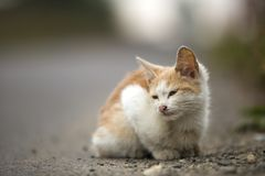 Close-up portrait of funny cute adorable ginger small white young cat kitten with closed eyes sitting dreaming sleeping outdoors. Close-up portrait of white stock image