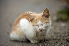 Close-up portrait of funny cute adorable ginger small white young cat kitten with closed eyes sitting dreaming sleeping outdoors. On blurred light colorful stock photo