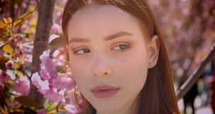 Close-up portrait of gorgeous ginger girl watching calmly into camera on pink floral park background. Close-up portrait of gorgeous ginger girl watching calmly stock video footage