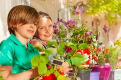 Happy boy and girl with potted strawberries plants stock photography