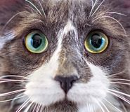 Close-up portrait of a kitten royalty free stock photo