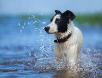 Close up portrait of mixed breed dog  with splashes. Stock Image