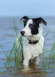 Close up portrait of mixed breed dog. stock photo