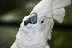 Close-up portrait of parrot Stock Photos