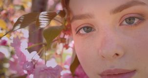 Close-up portrait of pretty ginger girl watching peacefully into camera on pink floral park background. Close-up portrait of pretty ginger girl watching stock video