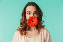 Close up portrait of a pretty young girl. In dress holding gerbera flower at her face isolated over blue background Royalty Free Stock Images