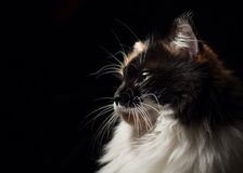 Close-up portrait in profile of spotted cat. Royalty Free Stock Image