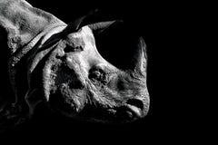 Close up portrait of Rhino on black background stock photos