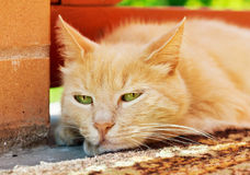 Close-up portrait of sad ginger cat outdoors royalty free stock image