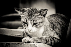 Close-up portrait of sad lonely cat.  royalty free stock image