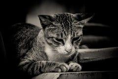 lonely sad cat - photo #38
