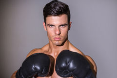 Close-up portrait of a shirtless muscular boxer. Over white background Stock Photography