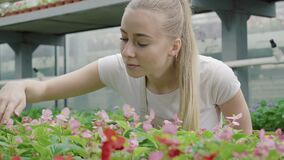 Close-up portrait of smiling cute woman admiring pink and red flowers in greenhouse. Blond Caucasian female biologist